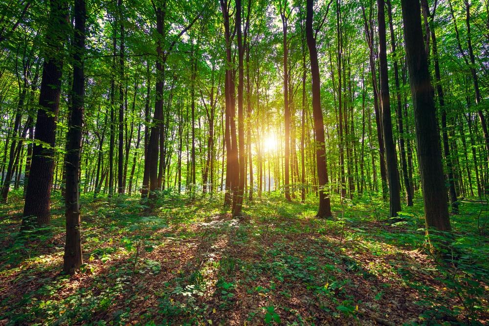 Forêt01nbspAlarmes ET Sécurité