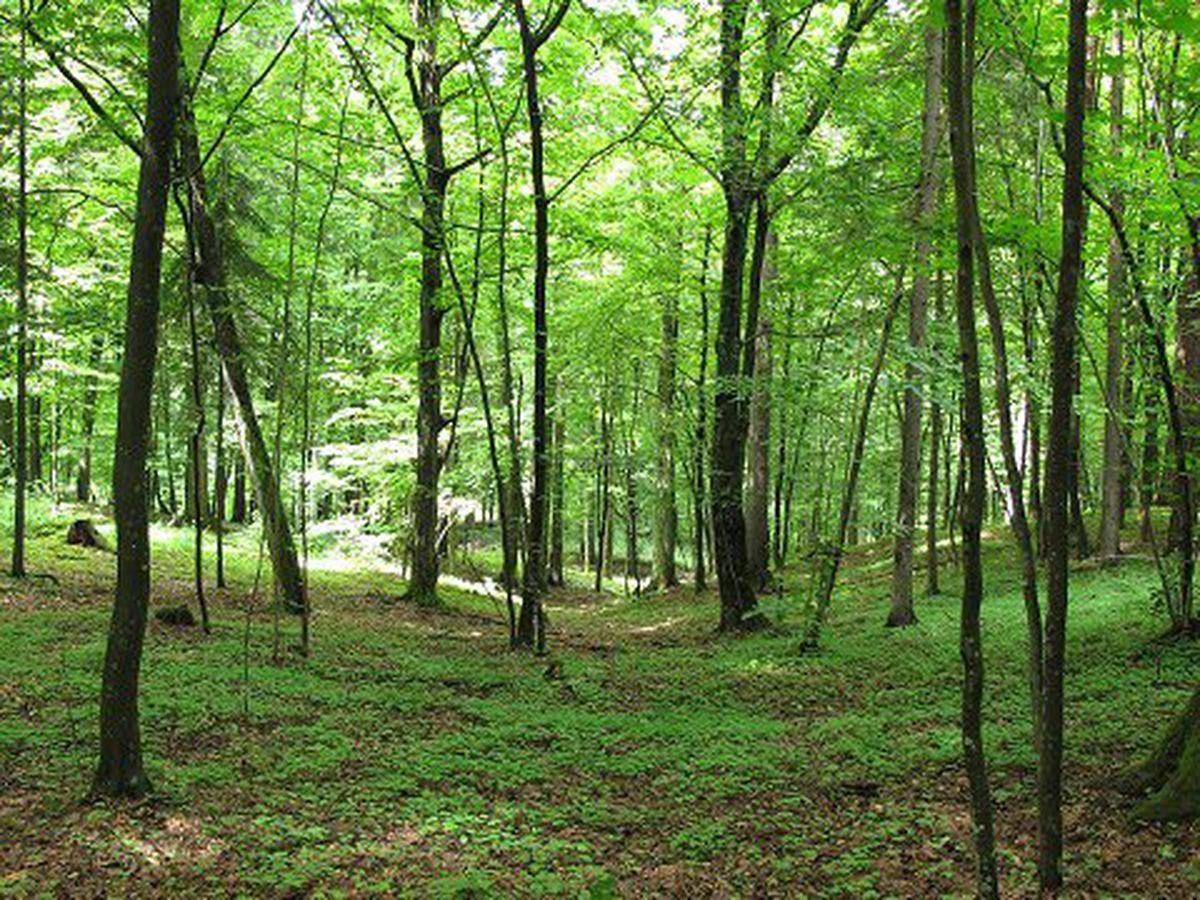 Forêt02nbspAlarmes ET Sécurité